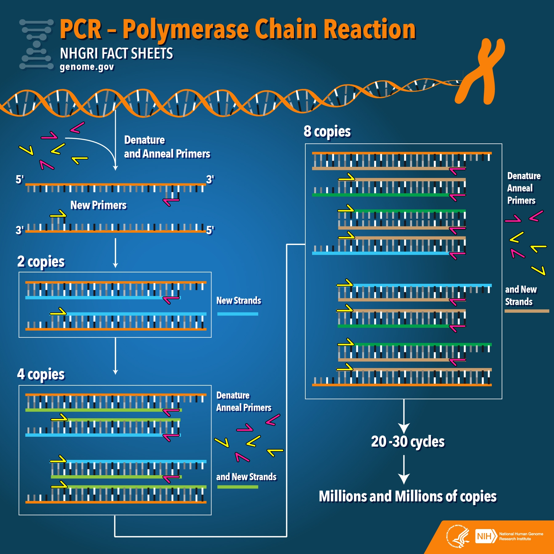 General schematic of PCR
