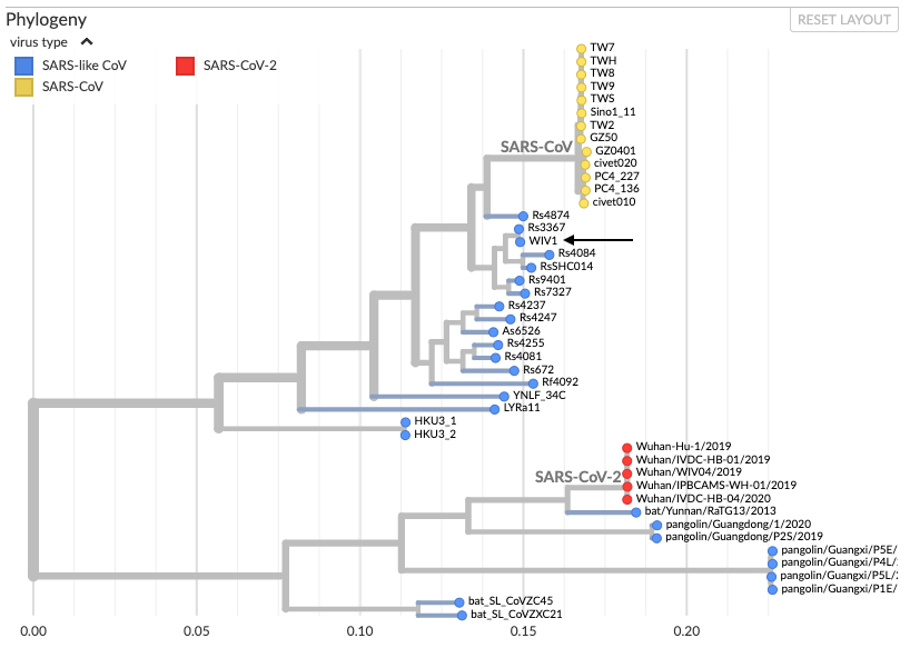 Phylogenetic tree-coronaviruses
